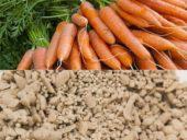 Engenheiros Civis britânicos fabricam betão com cenouras
